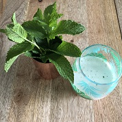 Fresh mint mojitob.jpg